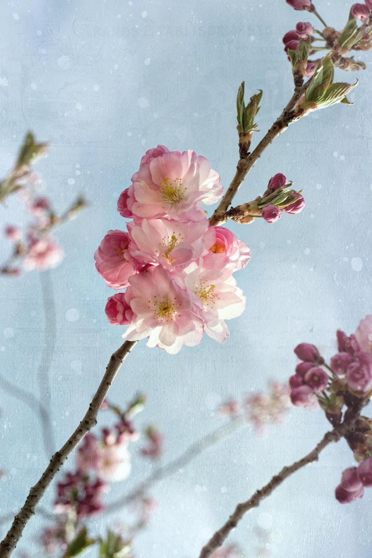 Cherrie Spring by stg123