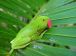 Parrot-frog