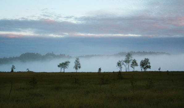 Morning mist at the fen