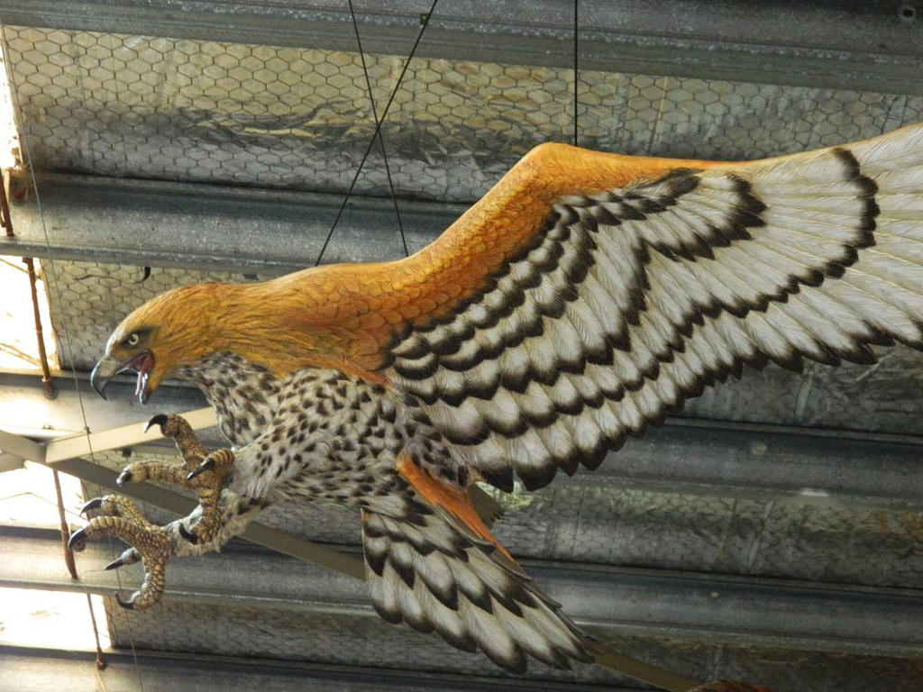 reconstructing the haast's eagle