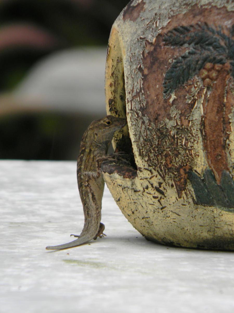 Lizardhut by SamRickim