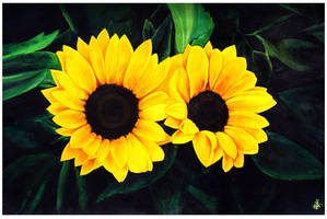 Sunflower by AimanMD