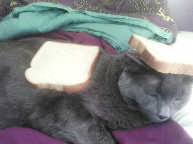 when i said bread your cat...i didnt mean this... by DeadVoltagexX