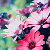 Colorful feelings by sensationkors