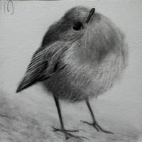Daily Sketch #10 - really round birb 3x3 by TricepTerry