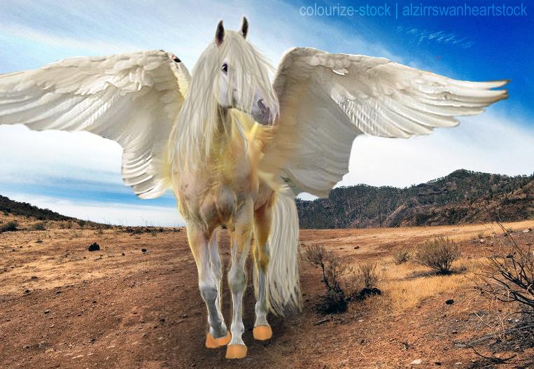 desert angel фото скачать