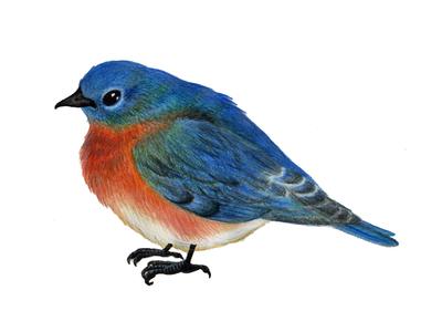 Bluebird Arts And Crafts