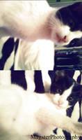 Meowww :d