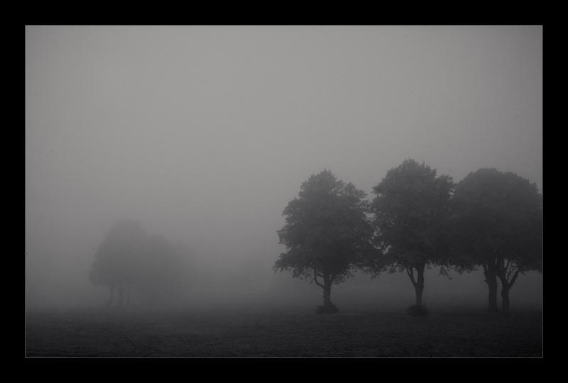 Delicate Dawn by northernmonkeyz