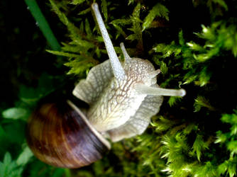 oh l'escargot n2 by FohFuR
