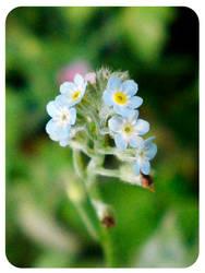 Petite Fleur Bleue by FohFuR