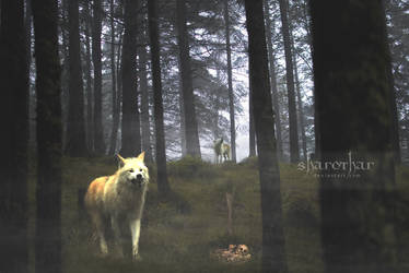 + Wolves From The Fog + by Sharothar