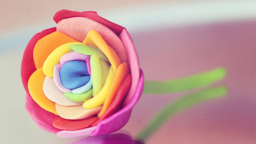 Rainbow rose by pinepassionmango on deviantart for How much are rainbow roses