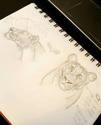 Lion Anatomy by TroilusMaximus