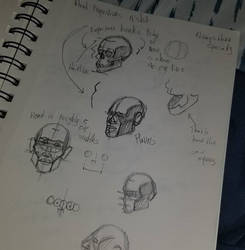 Head Proportions Practice by TroilusMaximus