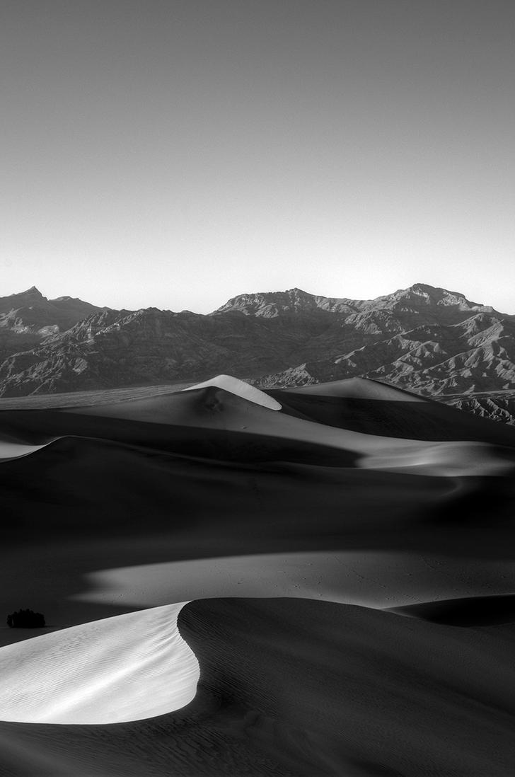 Lonely Bush by tahoe-sushi
