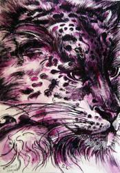the purple Snow Leopard