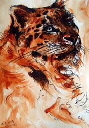 the orange Snow Leopard