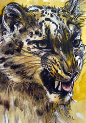 the yellow Snow Leopard