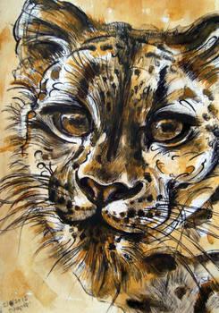 the ochre Snow Leopard