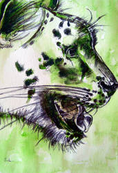 the green Snow Leopard