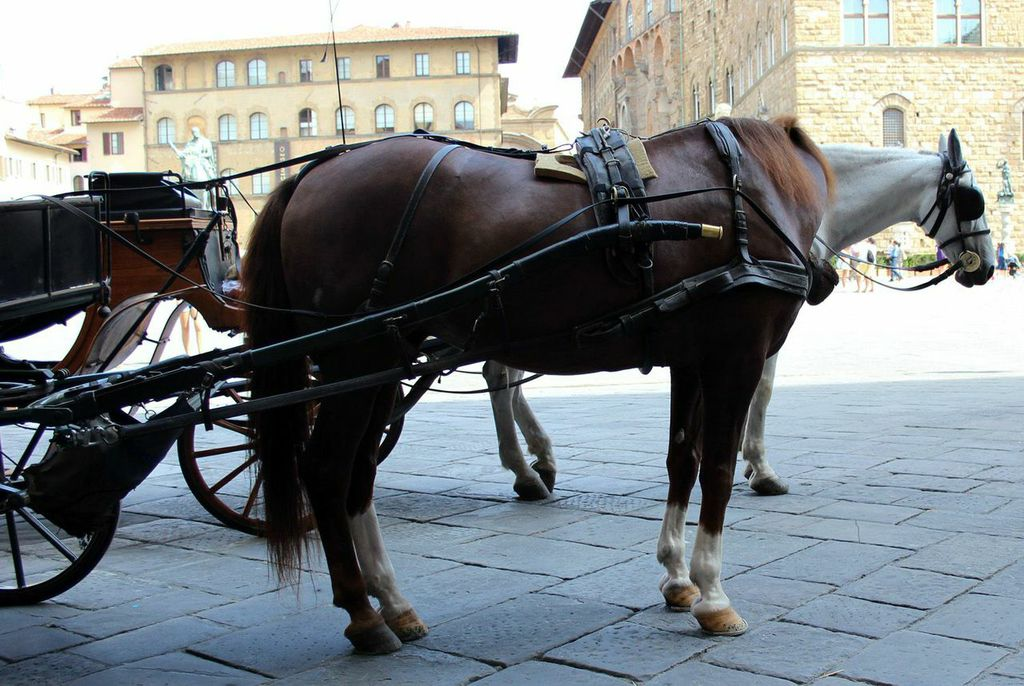 Pinto horse by myraincheck