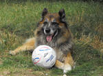 Dog and soccer ball 2 by A1Z2E3R