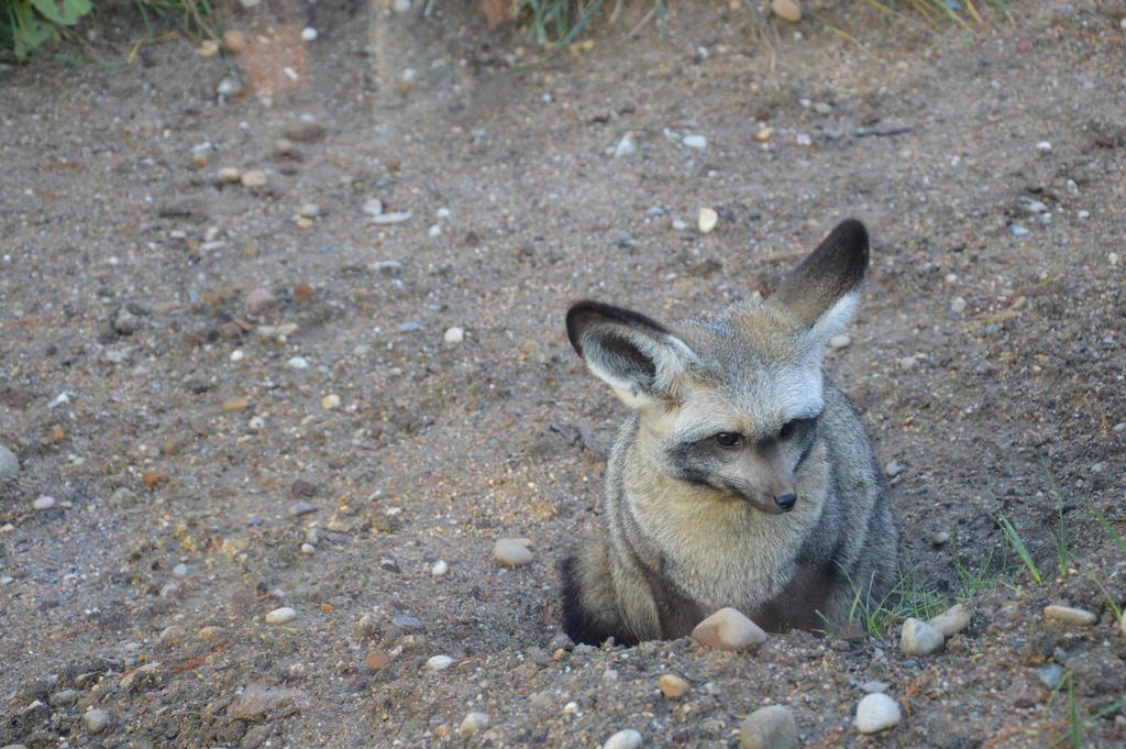 Desert fox by A1Z2E3R