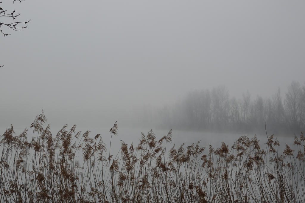 Etang dans le brouillard by A1Z2E3R
