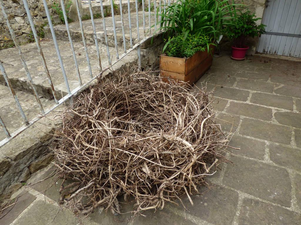 Huge nest by A1Z2E3R