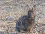 Wild rabbit 3 by A1Z2E3R