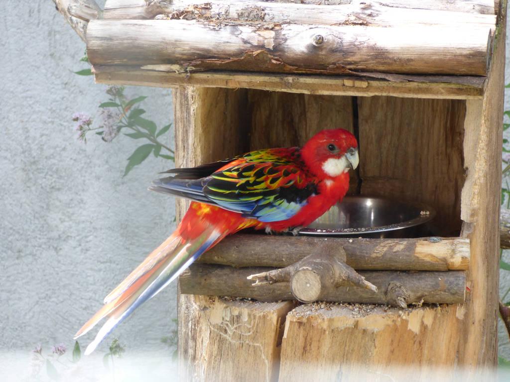 Multicolored parrot by A1Z2E3R