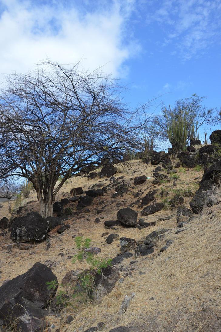 Dry landscape of Guadeloupe by A1Z2E3R