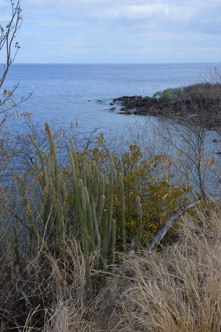 Dry Guadelupian landscape with cactus by A1Z2E3R