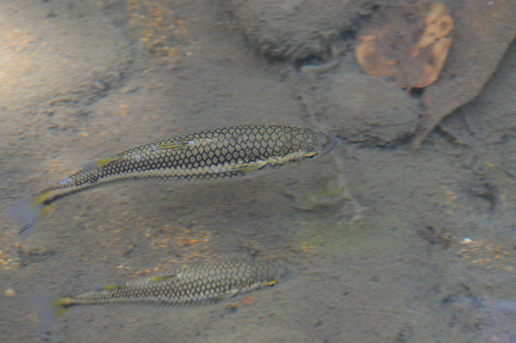 Fishes of Grande Plaine River by A1Z2E3R