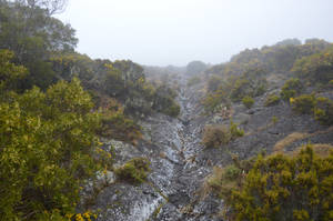 Natural path if Maido Peak by A1Z2E3R
