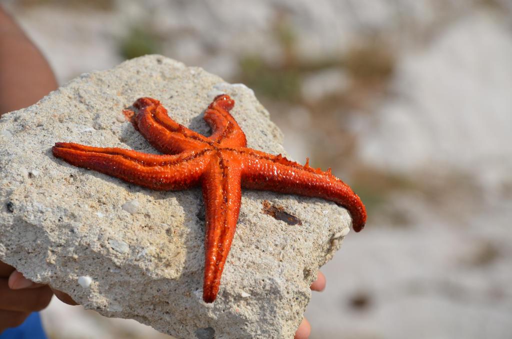 Starfish returned