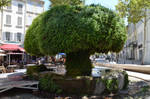 1st Mossy Fountain of Salon de Provence