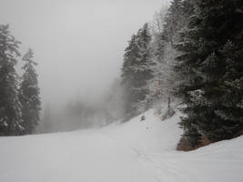 Foggy and snowy forest for my friend Marleen by A1Z2E3R