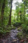 Wet Grand Etang path