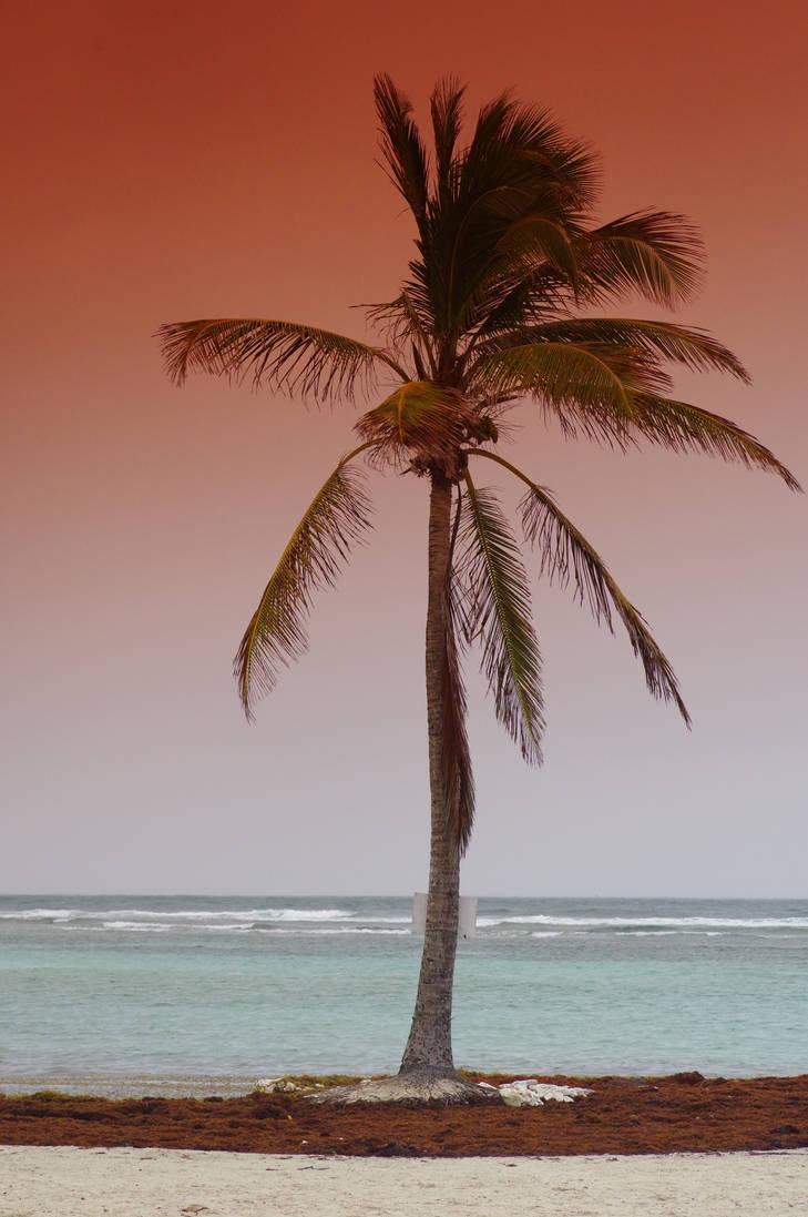 Lone Palmtree in sunrise in Guadeloupe beach by A1Z2E3R