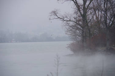 Foggy waterscape of RHONE River and flying seagull by A1Z2E3R