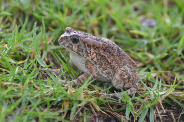 Frog in the grass by A1Z2E3R
