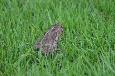 Back of frog in the grass by A1Z2E3R