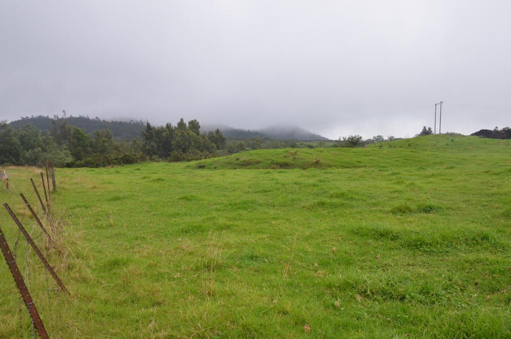 Foggy prairie to Reunion Island