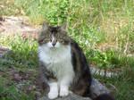 Alsatian cat female seeting in a  garden by A1Z2E3R