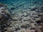 Rocks and pebbles in seabed by A1Z2E3R