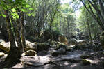 Corsican path with rocks in forest by A1Z2E3R