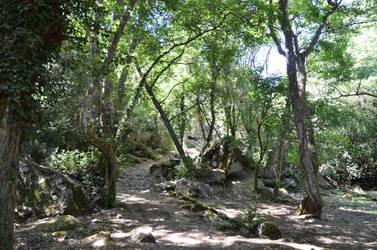 Corsican Forest of Cucuruzzu 2 by A1Z2E3R