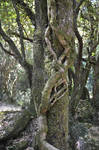 Natural hugged trunk in forest by A1Z2E3R